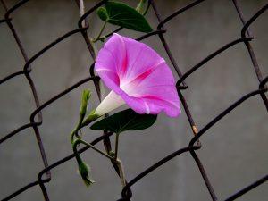 flower-974917_640