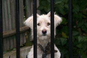 dog-1034172_640(1)